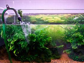 Частичная замена воды в аквариуме